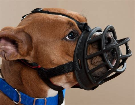 puppy muzzle best muzzle how to choose the right product on the market