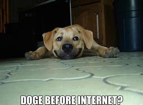 Internet Dog Meme - funny pics 2014 dogs before internet