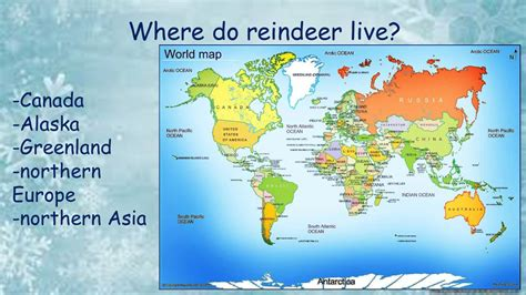 where does live reindeer created by l ford ppt