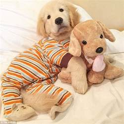Puppies In 24 Puppies In Pajamas Who Couldn T Be Any Cuter