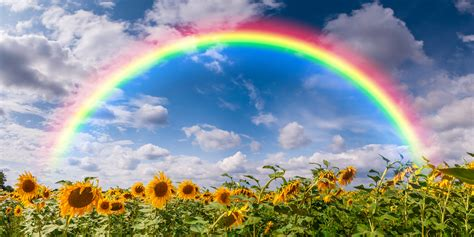 Rainbow Of rainbow and flowers www pixshark images galleries