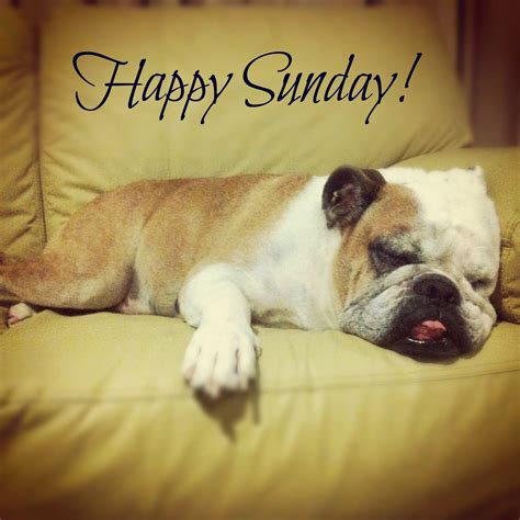 pug sunday sunday pictures images photos