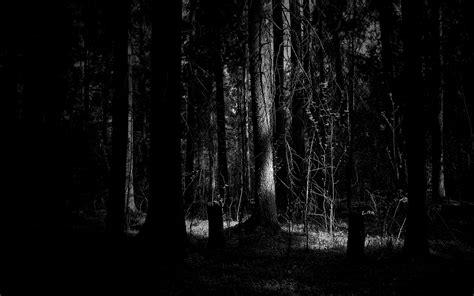 hd dark woods backgrounds pixelstalknet
