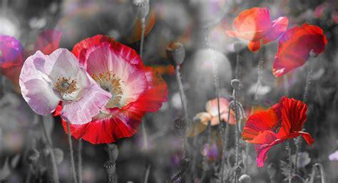 Poster Schwarz Weiß Mit Farbe by Teilkoloration Schwarz Wei 223 Foto Mit Farbe Posterxxl