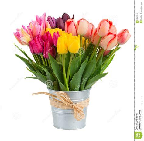 immagini di fiori tulipani mazzo di fiori dei tulipani in vaso metallo fotografia