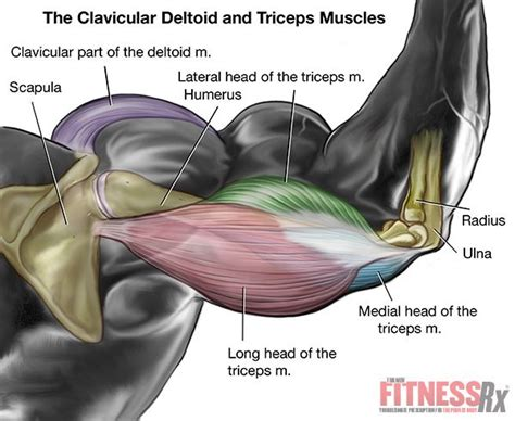close grip bench press for inner chest 43 best images about fitness rx on pinterest muscle