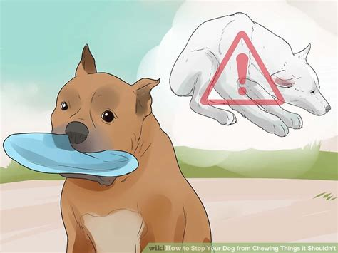 how to your to not chew on things how to stop your from chewing things it shouldn t 12 steps