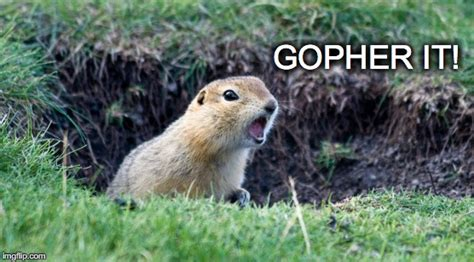 Gopher Meme - gopher meme 28 images janey mack meme imgflip gopher