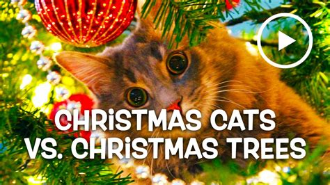 funny wayscto keep cats off christmas tree cats vs trees compilation january 2016