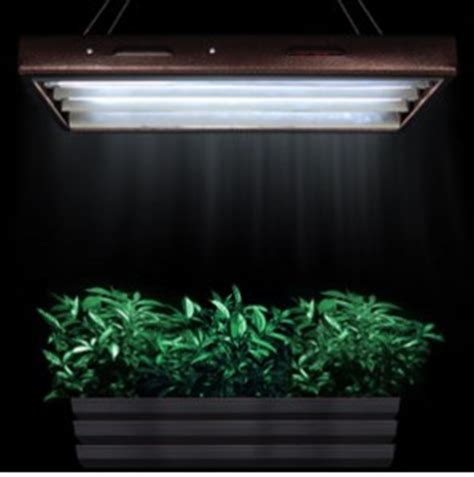 plants that grow in fluorescent light hydroponics equipments archives hydroponics equipment co