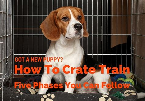 new puppy tips tips on how to crate your new puppy that pooch