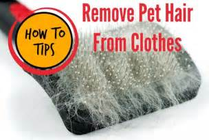 How To Remove Pet Hair From Clothes In The Dryer The O Jays Remove Pet Hair And Pets On