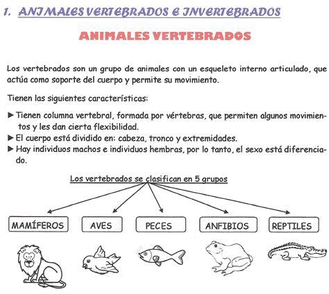 animales vertebrados mamiferos caracteristicas portal pin animales vertebrados mamiferos caracteristicas portal