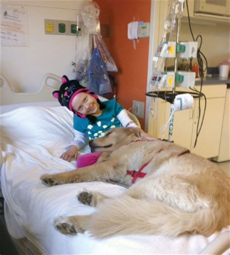 hospital dogs animals that heal magazine november 2012 nc