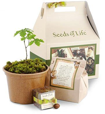 grow your own christmas tree kit best ways to gift memorial trees for loved ones