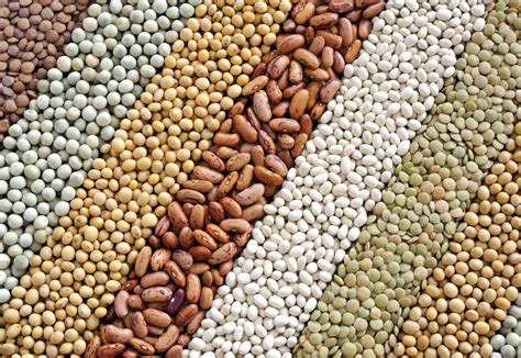 whole grains and beans contact us global grainsglobal grains