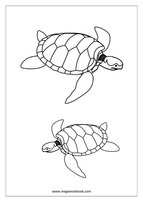 water bug coloring page bug coloring page of water coloring pages