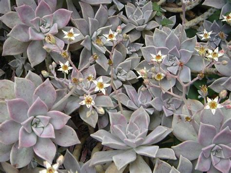 piante da terrazzo invernali piante invernali da esterno piante da giardino piante