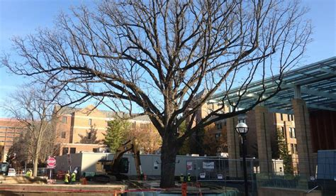 Umich Arbor Mba Investment Banking by Tree Moving To New Of Michigan Spot