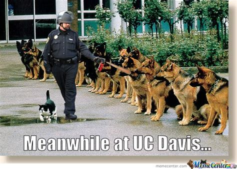 Uc Memes - meanwhile at uc davis by mustapan meme center