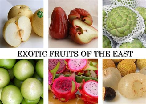 fruit x asia exoitc fruits of asia asian fruits fruits of the