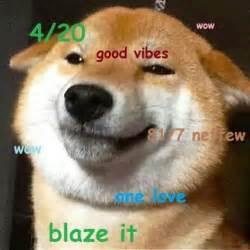 Doge Meme Shiba - doge meme shibe dog memes