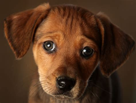 rescue centres animal rescue centres feel the strain after pets are abandoned zimbio