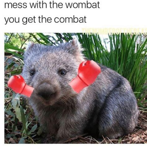 25 best memes about wombat wombat memes