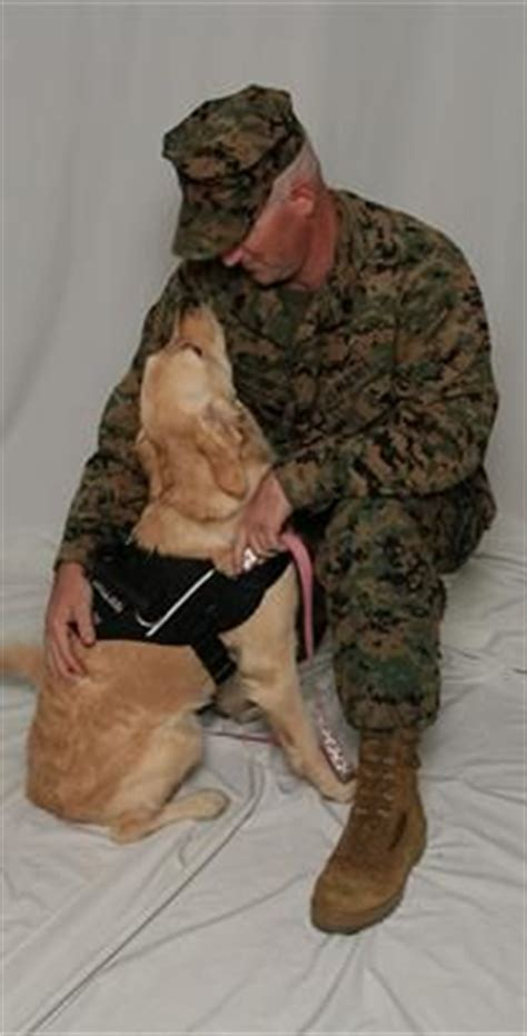 ptsd service arizona 1000 images about service dogs on service dogs diabetic alert dogs and