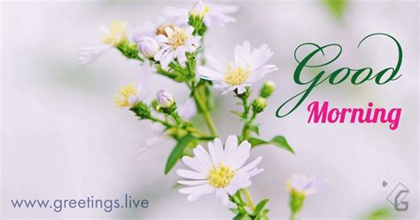 greetingslivefree daily  pictures festival gif images fresh morning flowers gif
