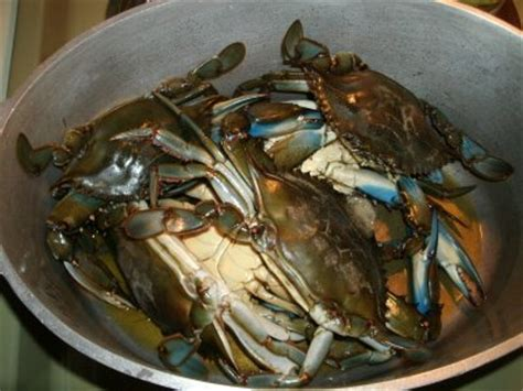cooking blue crab  easy   cook fresh blue claw crabs