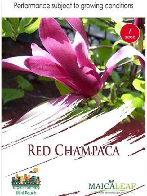 1 Pack Biji Tanaman Basil Kemanggi Merah Maica Leaf 20 S Seede jual biji bunga chaca kanthil merah maica leaf 1 pack di lapak dewi ratnasari sweetdewi