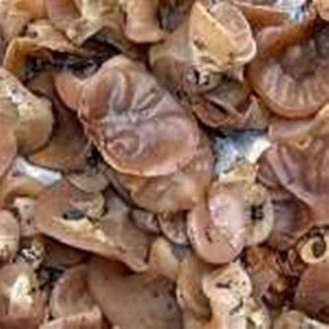 kotanimura jenis jamur  manfaatnya