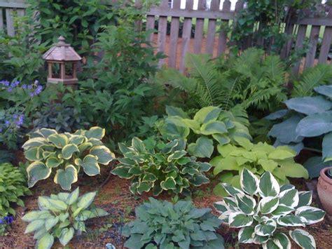 cute hosta and fern garden for shade garden pinterest