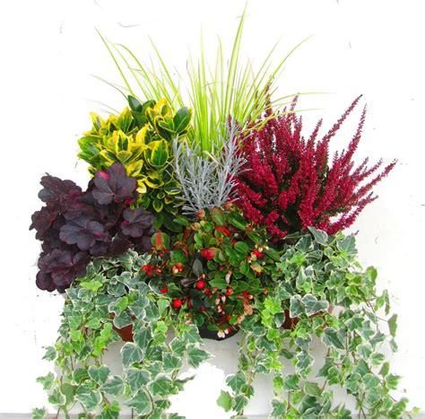 pflanzen versand pflanzen set f 252 r balkonbepflanzung 80 cm pflanzen