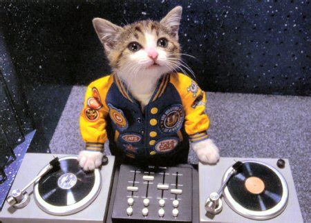Headset Lucu Cats Wearing Clothes Album On Imgur