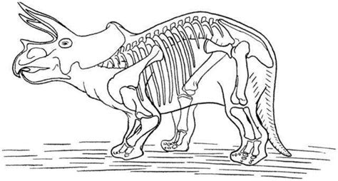 coloring pages dinosaur bones free coloring pages of dinosaur skeleton