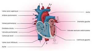 valve cardiaque sant 233 m 233 decine