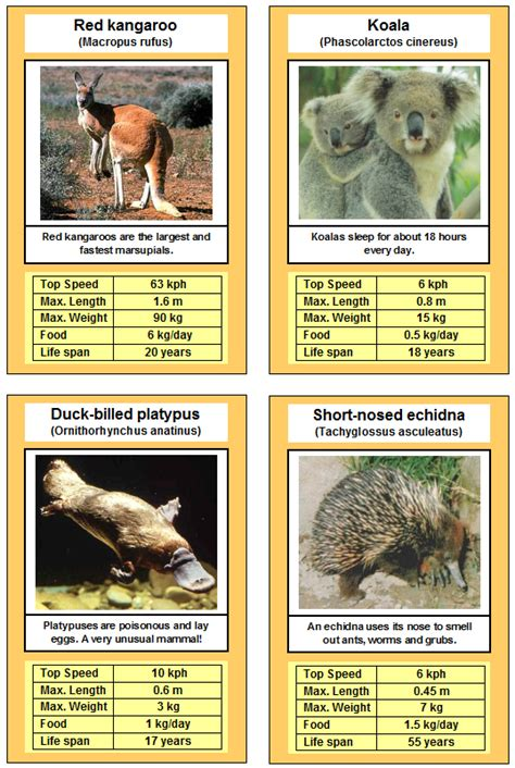 printable animal picture cards free printable card game animal trumps