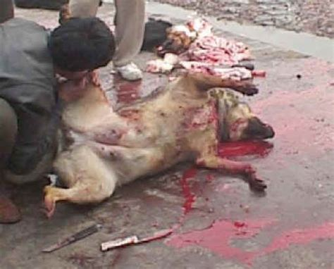 when do dogs stop being puppies exploitaion fur 12 s best friend not for everyone photo