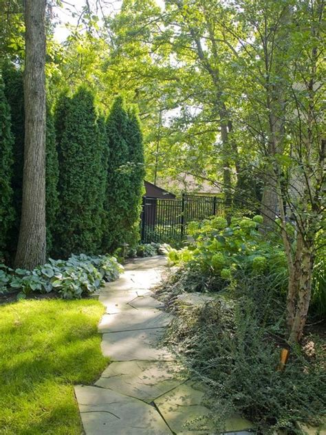 backyard privacy trees 30 wonderful backyard landscaping ideas
