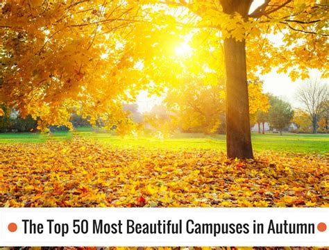The In Autumn the top 50 most beautiful cuses in autumn best