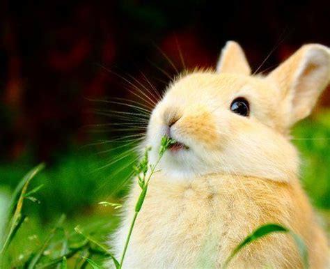 Gantungan Bunny Kopenhagen Bunny 1 pin daniel viera auf luciana