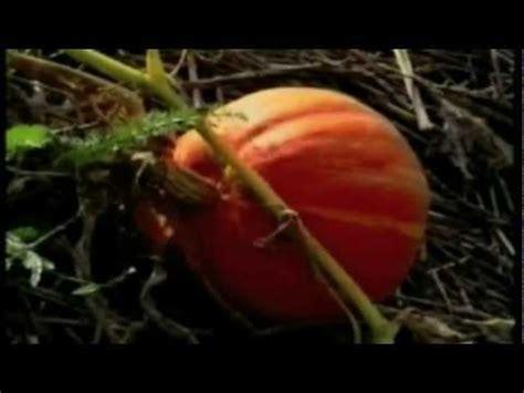 il giardino di emilia hazelip pachamama e il giardino di emilia hazelip