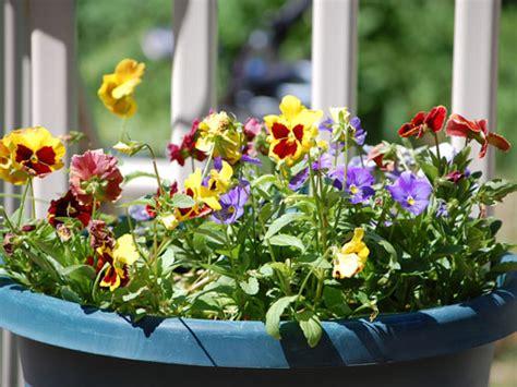 fiori e piante autunnali piante da balcone quali scegliere in autunno one