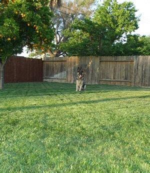 provide dogs access to water backyard ideas for dogs brilliant backyard for dogs landscaping ideas garden