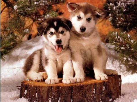google images puppies christmas dogs google search dogs pinterest