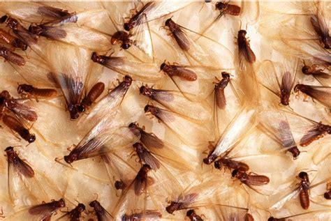 olathe termite control  brothers pest control