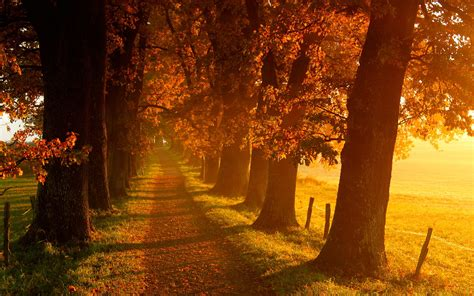 for fall beautiful fall scenery 18761 2560x1600 px hdwallsource