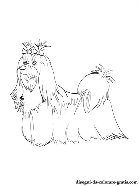coloring pages of maltese puppies disegno di maltese da colorare disegni da colorare gratis